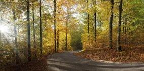 Дорога в осінньому лісі бук — стокове фото