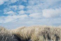 Grama seca e o céu azul à Dinamarca, Europa, Jutlândia do Norte — Fotografia de Stock