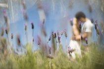Romantic couple kissing in lavender field — Stock Photo