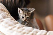 Маленький хлопчик з таббі кошеня — стокове фото