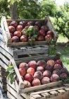 Свежие персики взял — стоковое фото