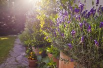 Кімнатні рослини перед будинком — стокове фото