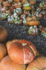 Pile of fresh pumpkins — Stock Photo