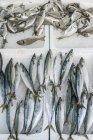 Сырая атлантическая скумбрия на льду в рыболовецком магазине — стоковое фото