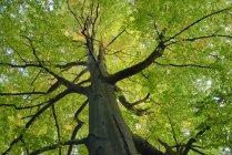 Дерево) у лісі, саксонської Швейцарії — стокове фото