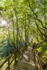 Denmark, Mon Island, Mons Klint, Wooden path in forest — Stock Photo