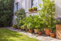 Potted plants in front of house — Stock Photo