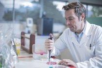 Scientifique de mâle mature pipetage en laboratoire — Photo de stock