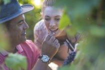 Мужчина и женщина в виноградниках дегустируют виноград — стоковое фото