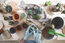 Giovane uomo trapiantare cactus sulla tavola di legno — Foto stock
