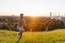 Hombre corriendo en el Prado en el parque al atardecer - foto de stock