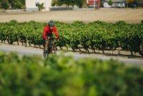 Испания, Андалусия, Херес-де-ла-Фронтера, человек на велосипеде по дороге между виноградниками — стоковое фото