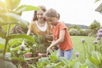 Smiling mother and daughter in garden planting — Stock Photo