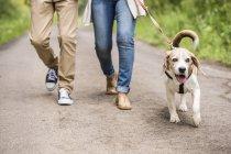 Couple en promenade avec chien dans la nature — Photo de stock