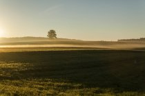 Landscape with single tree in the early-morning haze — Stock Photo