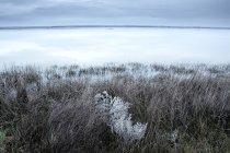 Іспанія, Villafafila лагун і болота взимку — стокове фото