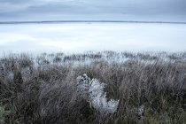 Spain, Villafafila lagoon and swamp in winter — Stock Photo