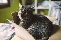 Close-up of Big cat lying inside small box — Stock Photo