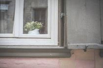 Pot de fleurs derrière la fenêtre de la maison résidentielle — Photo de stock