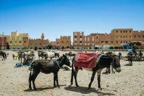 Марокко, Rissani, віслюку ринку — стокове фото