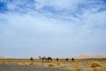 Marokko, Merzouga, Kamele in der Wüste Erg-Chebbi — Stockfoto