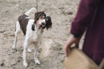 Gros plan de femme jouer avec chien — Photo de stock