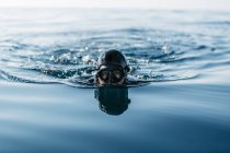 Man practicing free diving in the sea — Stock Photo