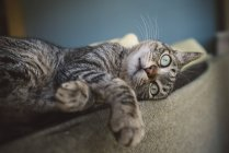 Tabby cat relaxing on backrest of couch — Stock Photo