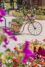 Вьетнам, Лат, три цикла в цветнике в дневное время — стоковое фото