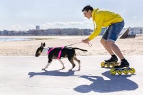 Inline-skater with his bull terrier — Stock Photo