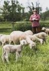 Вівчарські з Отара овець на пасовищі — стокове фото