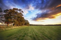 Écosse, East Lothian, champ d'herbe au coucher du soleil — Photo de stock