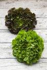 Ensaladas de hojas frescas - foto de stock