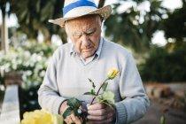 Senior schneidet Rosen im Garten — Stockfoto