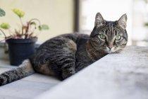 Таббі кіт на терасі — стокове фото