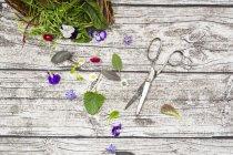 Frische Kräuter und essbare Blumen — Stockfoto