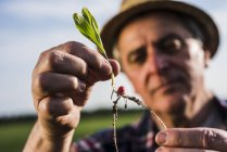 Farmer examining root of a plant — Stock Photo
