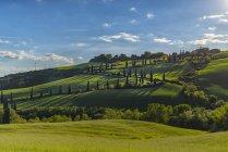 Італія, Тоскана, Валь d'Orcia, дорога з кипарисами навесні — стокове фото
