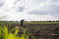 Farmer working in a field — Stock Photo
