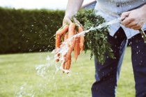 Joven trabajando en el jardín, manojo de zanahorias, limpieza con agua - foto de stock