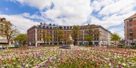 Germany, Munich, view of blossoming tulips on Gaertnerplatz — Stock Photo