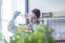 Female lab technician examining sample in laboratory — Stock Photo