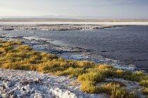Чилі, Сан-Педро-де-Атакама, озеро в пустелі — стокове фото