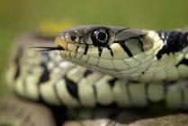 Vista da cobra — Fotografia de Stock