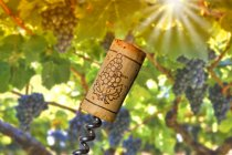 Close up of Corkscrew and cork against grape vine — Stock Photo