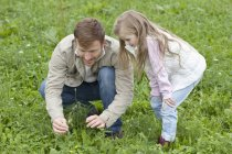 Father and daughter picking wildflowers in meadow — Stock Photo