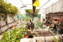 Empty greenhouse with irrigation system and plants — Stock Photo