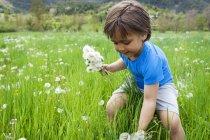 Little boy picking dandelions on meadow — Stock Photo