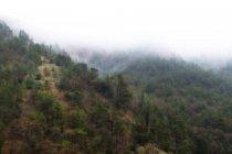 Foresta dell'Appennino in inverno, Gubbio, Umbria, Italia — Foto stock