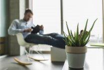 Topfpflanze und junger Mann im Hintergrund mit digitalem Tablet — Stockfoto